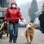 maski antysmogowe dla psów